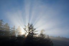 Helle whiterays des Tageslichtes glänzend durch Bäume Lizenzfreies Stockfoto