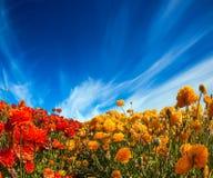 Helle Wolken über der Blumenpracht stockfotos