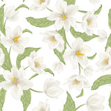 Hellebore flower seamless pattern watercolor white Stock Photos