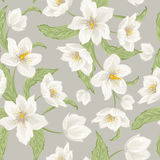 Hellebore flowers Christmas rose seamless pattern Stock Photo