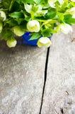 Hellebore flowers Royalty Free Stock Photos