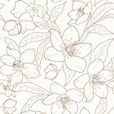 Hellebore winter rose flower foliage pattern brown Royalty Free Stock Image