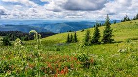 Helleboris、印地安画笔和其他野花在高高山 免版税库存照片
