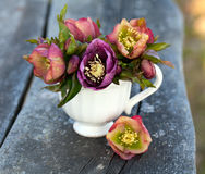 Helleborus flowers. Rustic background outdoors Stock Images