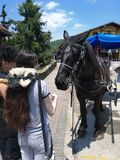 At Hellen City feeding a Horse in Summer Trip. royalty free stock photography
