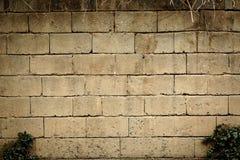 Heller Backsteinmauer- und Strauchzusammenfassungshintergrund stockfotografie