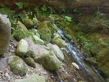 Heller Baum Stockfoto