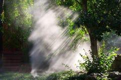 Heller Baum - Sun-Strahlen Stockfotografie
