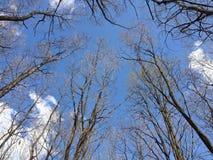 Heller blauer Frühlingshimmel mit Schattenbildern von Niederlassungen des kahlen Baums Lizenzfreie Stockfotos
