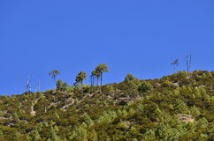 Heller blauer Himmel mit geschwollenen weißen Wolken Lizenzfreies Stockbild