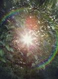 Heller Blendenfleck des Regenbogens auf einem Apfelbaum Stockfotos