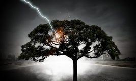 Heller Blitz schlug den Baum Lizenzfreies Stockfoto