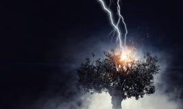 Heller Blitz schlug den Baum Stockbild