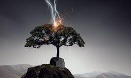 Heller Blitz schlug den Baum Stockbilder