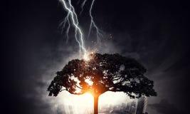 Heller Blitz schlug den Baum Lizenzfreie Stockbilder