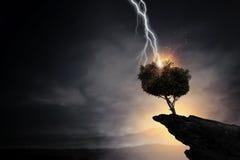 Heller Blitz schlug den Baum Stockfoto