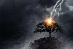 Heller Blitz schlug den Baum Stockfotografie