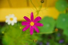 Heller Blumenhintergrund Stockfoto