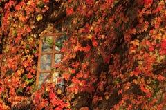 Heller bunter Herbstlaub, der ein Fenster umgibt stockfotografie