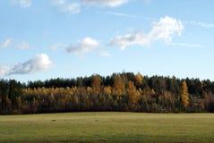 Heller entweichender Wald und Feld Stockbilder