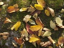 Heller farbiger Herbstlaub Stockbild