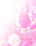 Heller Filter der Rosen-Blumenweinlese und Farbfilter wenden Design und Hintergrund an Stockfotografie