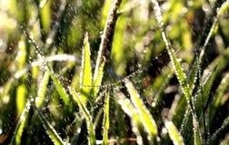 Heller Frühlingsregen und Tropfen auf einem Spinnennetz Lizenzfreies Stockfoto