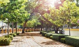 Heller Gehweg des Morgens mit grünem Baum Stockfotografie