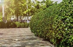 Heller Gehweg des Morgens mit grünem Baum Stockbild
