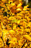 Heller gelber Herbstlaub im Wald Stockbild