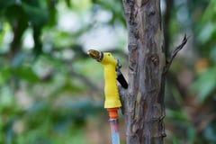 Heller gelber Wasserspray stockfotos