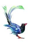 Heller gemalter Vogel auf einem weißen Hintergrund Stockfotos