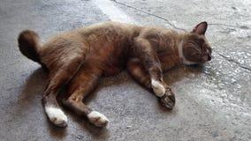 Heller glücklicher Tag für eine blinde Katze des Auges Lizenzfreie Stockbilder