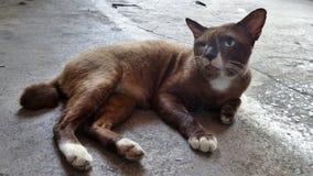 Heller glücklicher Tag für eine blinde Katze des Auges Lizenzfreies Stockfoto