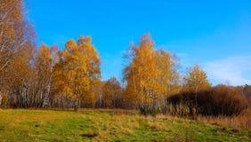 Heller Herbst Grove in Moskau, Russland Lizenzfreies Stockfoto