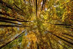 Heller Herbstlaub in der natürlichen Umwelt Stockbilder