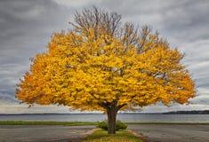 HerbstLinden Lizenzfreie Stockbilder