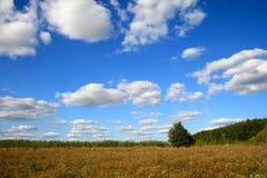 Heller Himmel, Bäume und Wolken Lizenzfreies Stockfoto