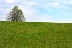 Heller Himmel und Gras Lizenzfreie Stockbilder
