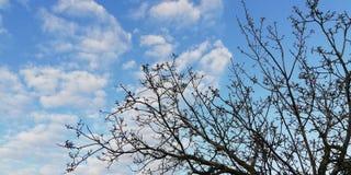 Heller Hintergrund Lebhafte Spitze Dunkle Baumaste kontrastieren zu den weißen Wolken und zum blauen Himmel stockfotos
