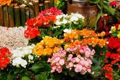 Heller Hintergrund mit bunten Rosen Stockbilder