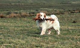 Heller Hund mit Steak Lizenzfreie Stockfotografie