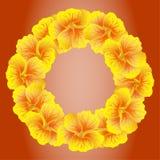 Heller Kapuzinerkäsekranz Wilde gelbe Blumen Blumenkreis Beautifullokalisiert auf rotem Hintergrund Auch im corel abgehobenen B stockfotografie