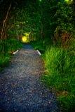 Heller Kies-Wanderweg im Acadia-Nationalpark Lizenzfreie Stockbilder
