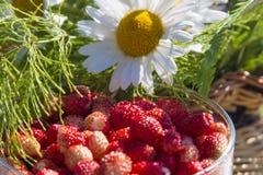 Heller Korb der Frucht und der Blume Stockbilder