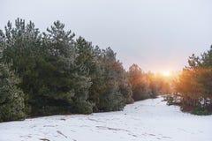 Heller Morgen in der winterlichen Waldwinterlandschaft im schneebedeckten Holz Stockfoto