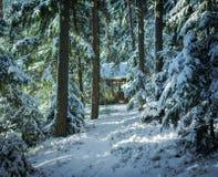 Heller Morgen in der winterlichen Waldwinterlandschaft im sno Lizenzfreie Stockfotografie