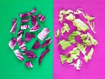 Heller purpurroter und grüner Kopfsalatsalat verlässt Zusammensetzung Lizenzfreies Stockfoto