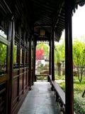 Heller roter Acerbaum in klassischem Garten Suzhous Stockfoto