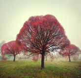 Heller roter Baum steht im Nebel im Herbst Stockfoto
